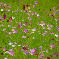 Sanbangsan flowers
